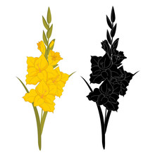Gladiolus Flower Silhouette And In Color. Bright Autumn Flower Isolated On White Background
