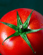 Close-up of a fresh ripe greenhouse grown tomato