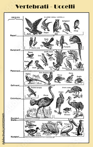 Photo Zoology, all kind of vertebrate birds, birds of prey, sparrows, waterfowls, dove