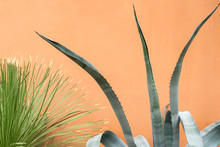 An Agave Plant Next To An Oran...