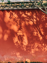 Shadow Of Trees On Ancient Chinese Architecture