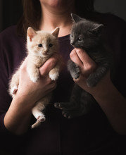 Close Up Of A Woman Holding A Small Adorable Kitten In Each Hand.