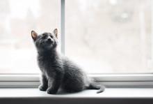 Adorable Gray Kitten Sitting O...