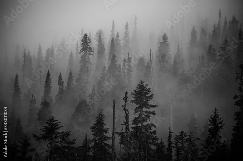 Scenic views of the temperate rainforest with mist and low cloud - 333031034
