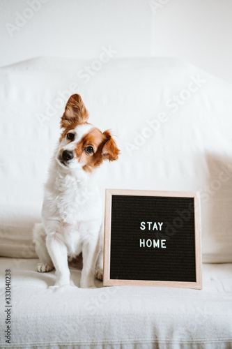 Fototapeta cute jack russell dog on the sofa with letter board with STAY HOME message. Pandemic coronavirus covid-19 concept obraz