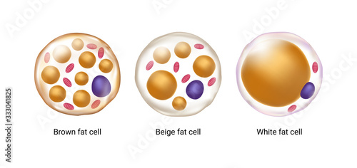 Vector set of brown, beige and white fat cells Wallpaper Mural