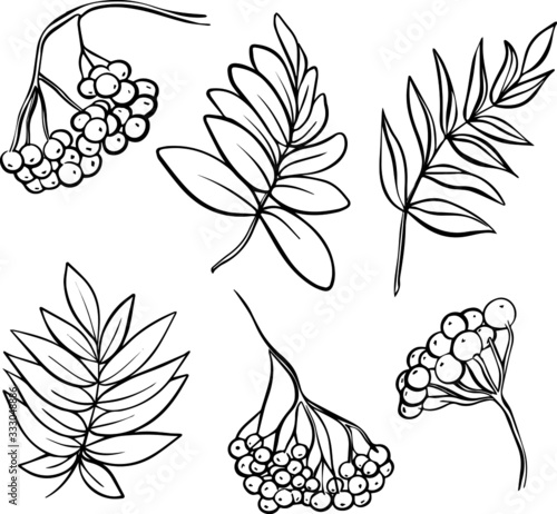 Hand-drawn set of mountain ash and leaves isolated on a white background Wallpaper Mural