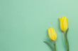 Yellow tulip flowers on green background. Floral composition, flat lay, top view, copy space