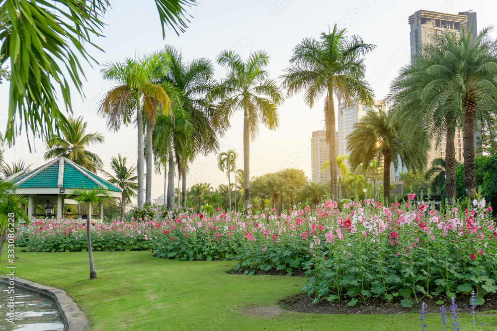 Fototapeta Red and pink Hollyhock flower garden blooming on fresh green grass smooth lawn carpet, green roof pavilion and palm trees on background  in good maintenance landscape of public park