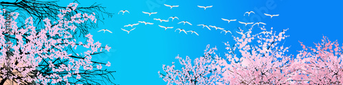 Fototapeta swans and blossoming trees crowns on blue sky background obraz