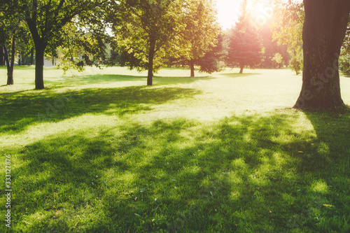 Beautiful public park on the sunshine. The shadow of the tree on a sunny day. Nature summer landscape. Selective focus and blurred background. #333127876