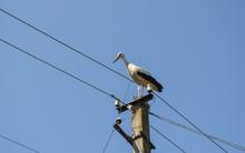 Stork On A Pole. Storks Nest O...