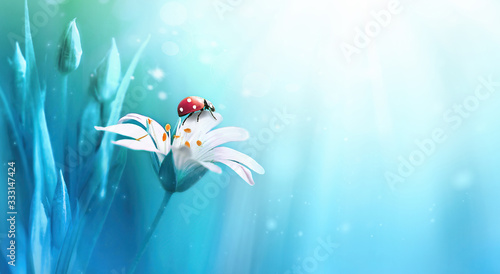 Beautiful white forest flower with buds and ladybug on blue background in rays of light macro in nature spring or summer Tableau sur Toile