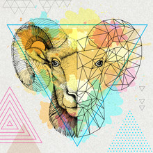Hipster Animal Realistic And Polygonal Ram Or Mouflon Face On Watercolor Background. Astrology Zodiac Sign Aries