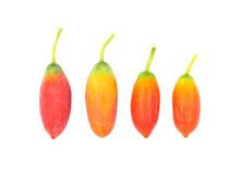 Cocconia Grandis (L.) Voigt Is...