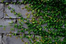 Beautiful Green Wall Crawling ...
