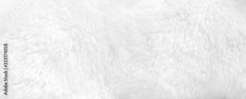 White fur background close up view. Banner Fototapete