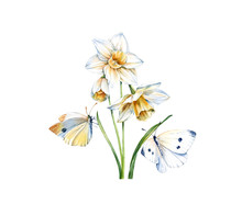 Watercolor Daffodil Flowers Wi...