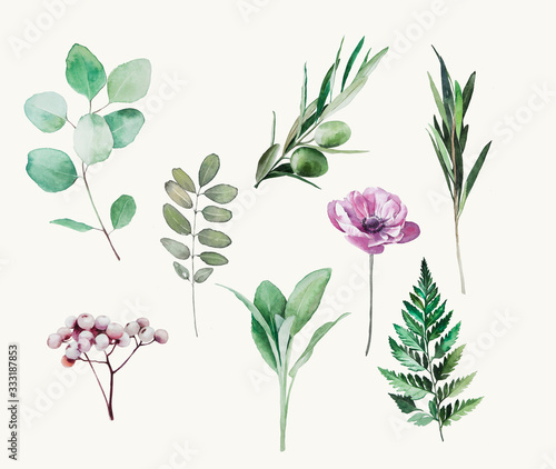 watercolor plant (fern, eucaliptus, sag, olive, poppy) - 333187853