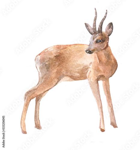 Obraz na plátně Watercolor roe deer  animal on a white background illustration