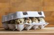 Wachteleier in einer Eierpappe vor Holz Hintergrund