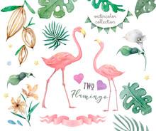 Exotic Tropic Bird Pink Flamin...