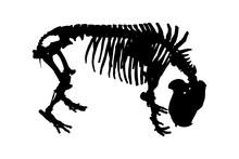 Pygmy Hippopotamus Black Skeleton On White Background