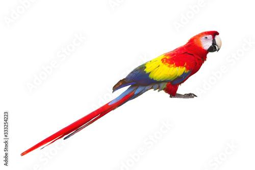 Photo red macaw bird isolated on white background freigestellt  Ara ambigua Wildlife s