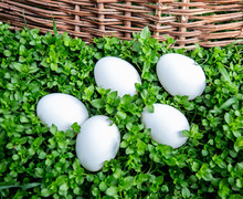 Easter White Eggs On Green Grass And Fence
