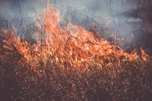Burning Dry Last Year's Grass ...