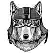 Wild wolf, dog Hipster animal wearing motorycle helmet. Image for kindergarten children clothing, kids. T-shirt, tattoo, emblem, badge, logo, patch