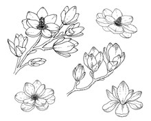 Magnolia Flower Drawings. Blac...