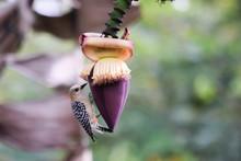 Bird Woodpecker