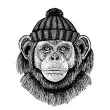 Chimpanzee Monkey Cool Animal ...