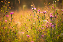 Field Flowers In The Meadow At...