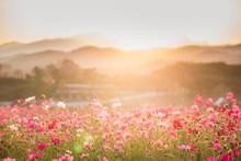 Conmos Flowers Mountain Veiw U...