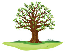 One Wide Massive Old Oak Tree With Green Leaves And Acorns Isolated Illustration, Majestic Oak With A Rough Trunk And Big Crown On Green Meadow With Grass In Summer Day Isolated