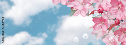 Photo Pink sakura flowers and soap bubbles against the clouds sky