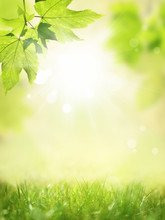 Glowing Background With Green Meadow And Plant.