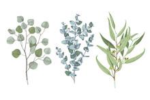 3 Types Of Eucalyptus