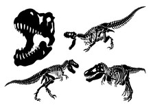 Graphical Set Of Tyrannosaurus Skeletons Isolated On White Background,vector Illustration,paleontology