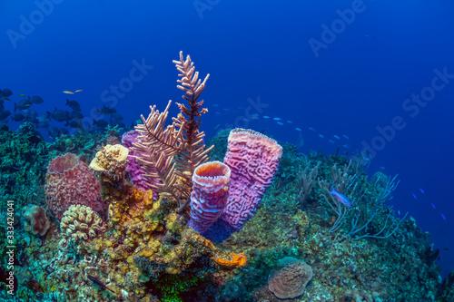 Caribbean coral garden Canvas Print