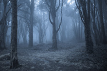 Spooky Misty Foggy Dark Forest...