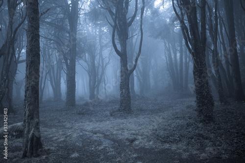 Obraz na plátně Spooky misty foggy dark forest at night