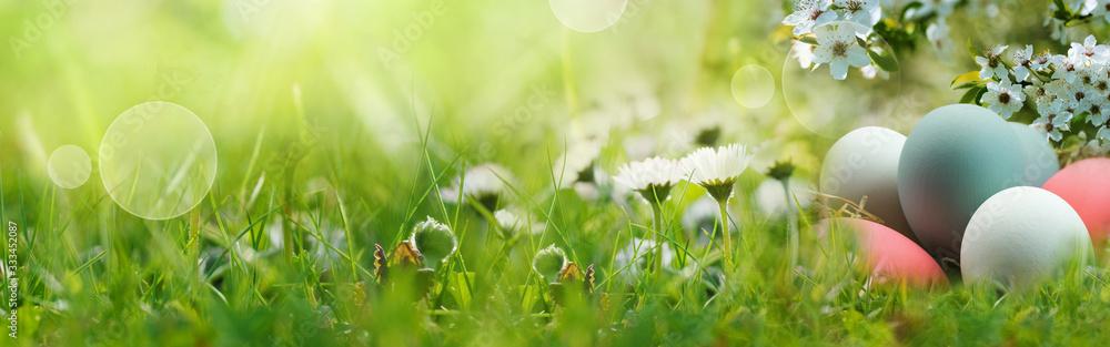Fototapeta Easter eggs on spring meadow