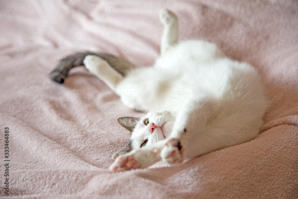 Fototapeta Leniwy kot