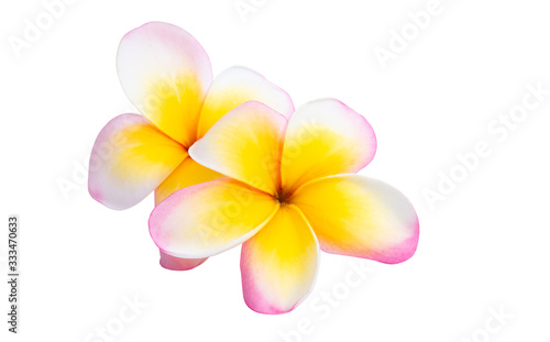 Photographie frangipani flower isolated