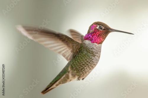 Photo Hummingbird Hovering in a Suburban Backyard