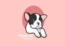 Cute French Bulldog Puppy Pose...