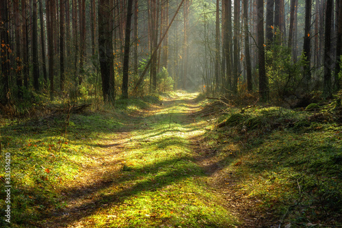 Scenic spring forest